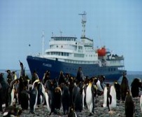 S�dpolarregion, Antarktika-Expeditionen - Pinguine vor dem Expeditionsschiff am Anlandeplatz